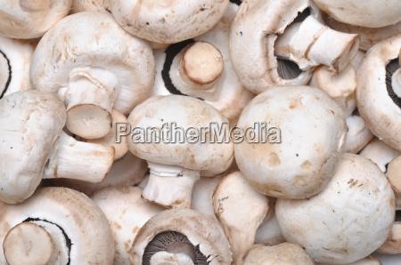 cibo freschezza verdura crudo fungo champignon