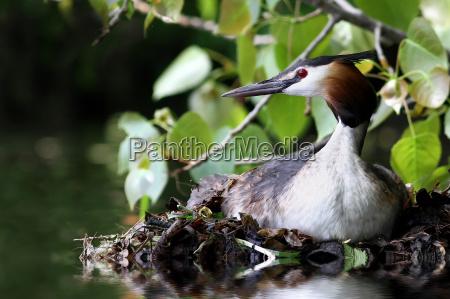 uccello animali uccelli anatre anatra natura