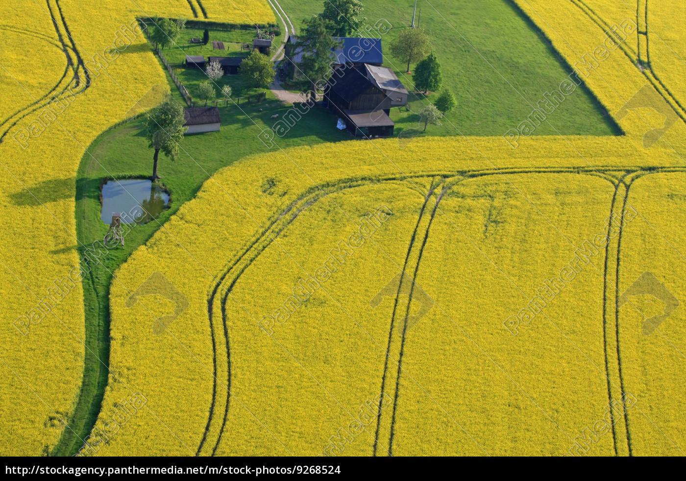 campo di colza, primavera, fotografia aerea, fattoria, paesaggio, natura - 9268524