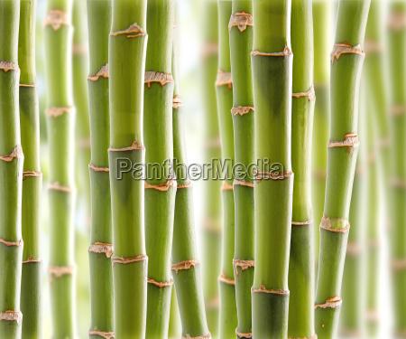 giungla bambu tranquillo calma pulito calmare