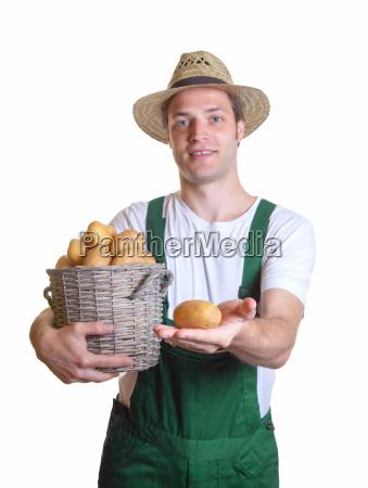 freschezza contadino raccolta di patate vendemmia