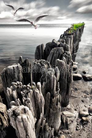 groynes on the baltic sea beach