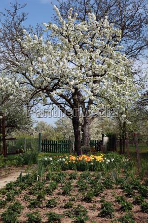 albero alberi giardino fiore fiori frutta