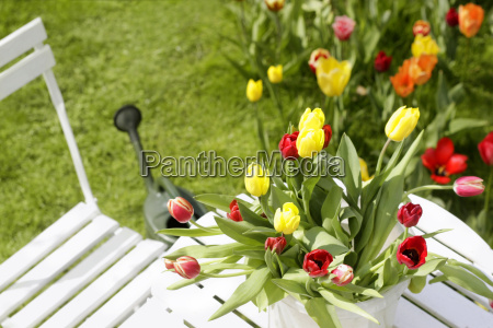 tulips on garden table with watering