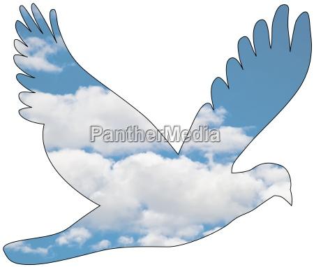 colomba con pattern cloud immagine