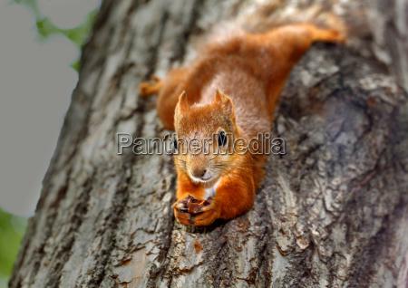 albero parco mammifero marrone allaperto scoiattolo