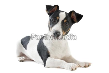 animale animale domestico peluche cane cucciolo