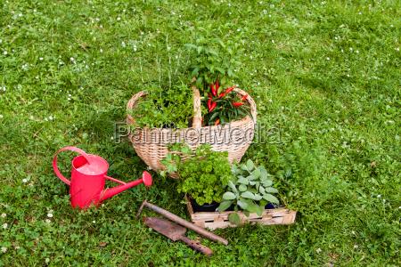 giardino cestino salvia basilico giardini dragoncello