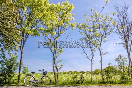 alberi primaverili con bicicletta