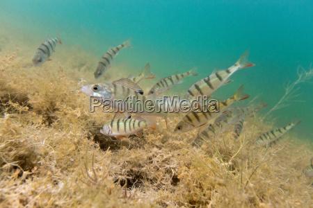 animale pesce sottacqua natura predatore acqua