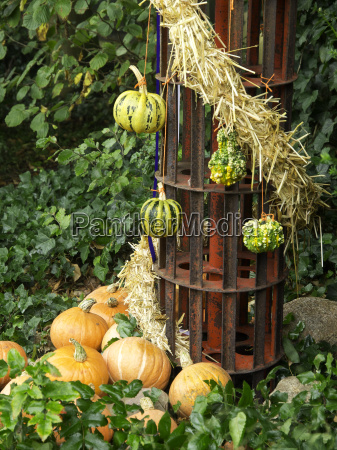 arancia giardino frutta zucca ottobre giardini