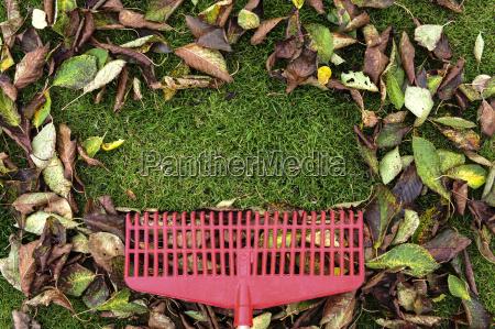foglia giardino foglie di autunno giardini