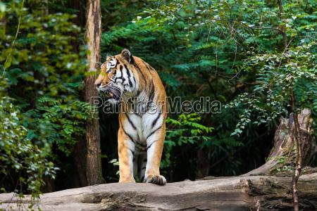 pericolo bello bella enorme albero animale