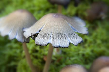 fungo fungo velenoso tossico velenoso autunno