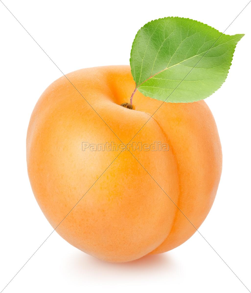 albicocca, con, foglia - 10122741