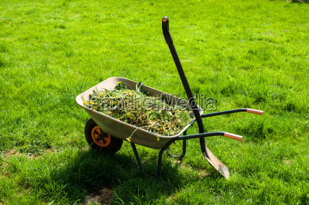 foglia strumento attrezzo tempo libero giardino