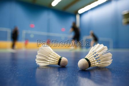 badminton, -, campi, di, badminton, con - 10188977