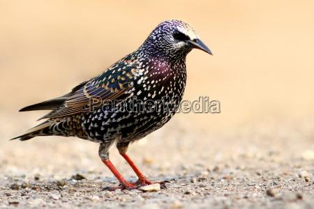 animale uccello animali uccelli natura stella