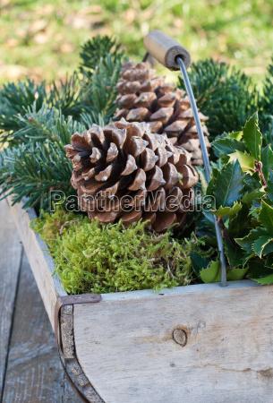 inverno legno rami cestino ramo noci