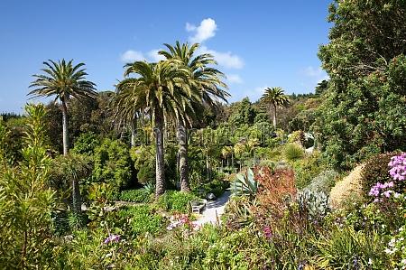 giardino inghilterra tropicale cornovaglia