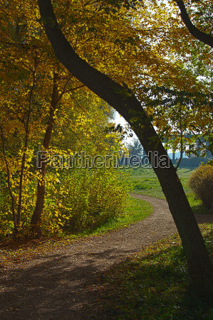 late autumn trail