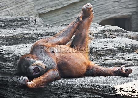 femminile animale mammifero marrone selvaggio faccia