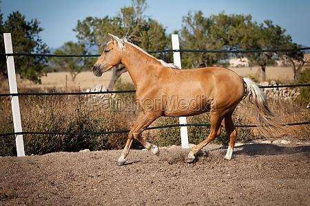 marrone francese girato cavallo ritratto in