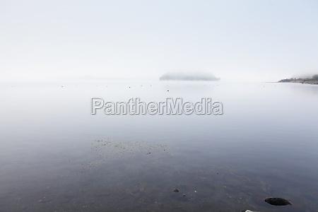 bello bella albero legno campo nebbia