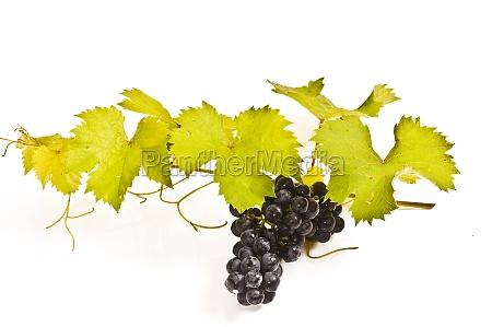 dolce uva zucchero frutta delizioso vendemmia