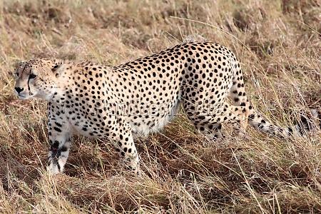 andare viaggio viaggiare mammifero kenia animali