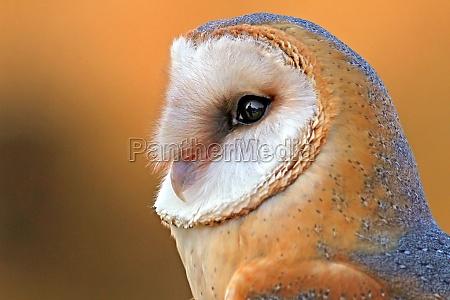 ambiente animale uccello animali uccelli gufo
