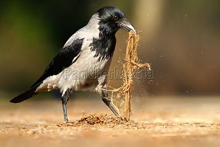 ambiente uccello uccelli primavera corvo corvi