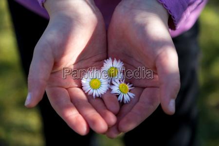 spettacolo fiore pianta fioritura fiorire primavera