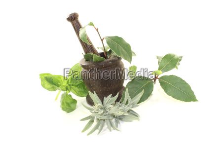 bay sage and basil in a