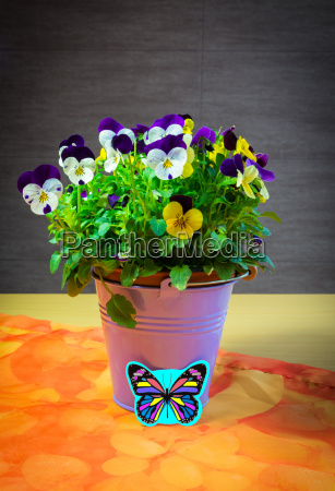 spring flower with butterfly