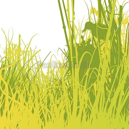 conservazione della natura riserva naturale pulcino
