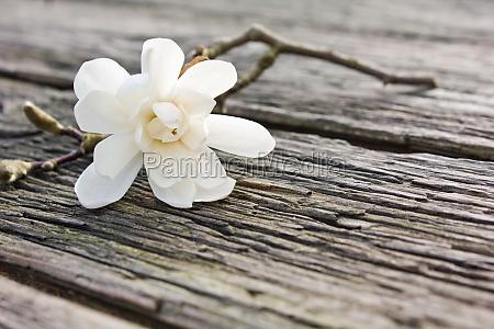 lavagna pannello legno marrone fioritura fiorire
