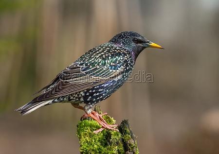 giardino uccello uccelli primavera timido muschio