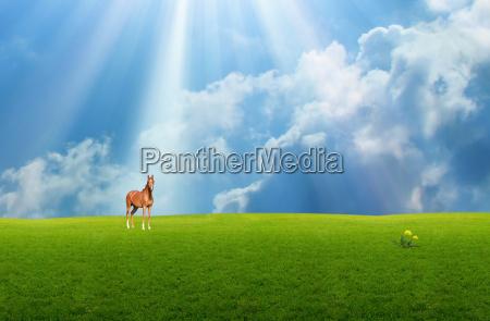 blu cavallo animale mammifero verde fauna