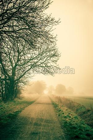 foglia viaggio viaggiare albero suolo terra