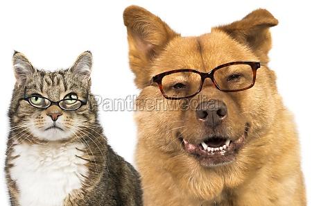 cane e gatto con gli occhiali
