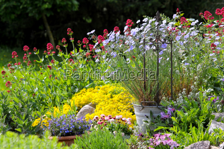 fioriture colorate in giardino
