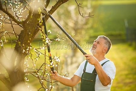 ritratto di un belluomo anziano giardinaggio