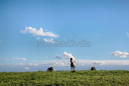 giro cavallo cavalli polonia prato cielo