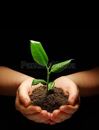 pianta in mano
