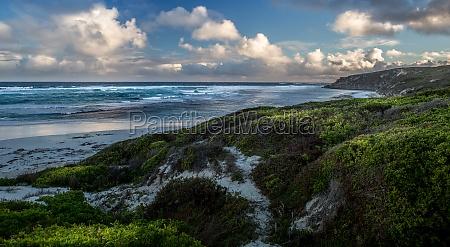 australia costa surf acqua salata mare