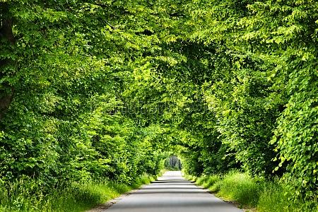 foglia albero alberi parco foglie estate