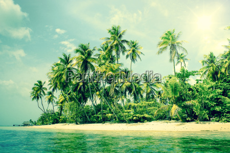 isola tropicale con palme sulla spiaggia