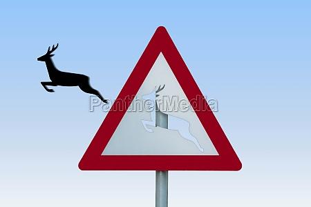 cervo salta fuori dallo scudo