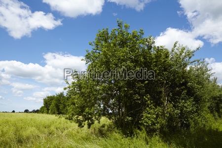 albero alberi arbusti cespugli germania cespuglio